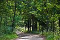 A lane near Kernave, Lithuania, Sept. 2008 - Flickr - PhillipC.jpg