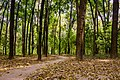 "A part of the ""National Botanical Garden"" of Bangladesh.jpg"