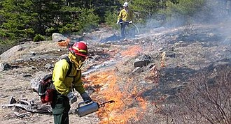 Acadia National Park - Firefighters at a prescribed burn, keeping vistas clear and reducing wildfire risk