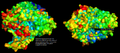 Acetylcholinesterase Surface Structure & Active Site.png