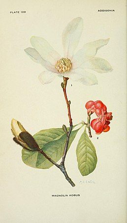 Addisonia (PLATE 108) (8591362389).jpg