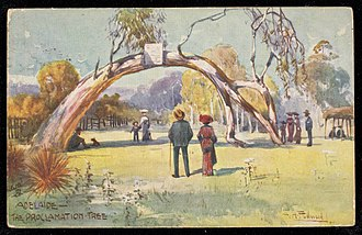 The Old Gum Tree - Postcard from 1903