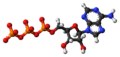 Adenosine-triphosphate-anion-3D-balls.png