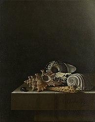 Adriaen Coorte: Shells on a Stone Plinth