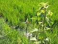 Agricultura a la Ribera - 30.jpeg