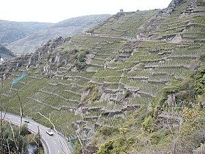 Ahr Valley - Vineyards in the valley near Mayschoß