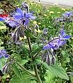 Alaska Botanical Garden ENBLA02.jpg