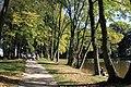 Alejka wzdłuż stawu w parku w Młochowie.jpg