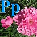 Alfabet roślin - literka P.jpg