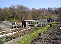 Allotments, Taylor Hill Road, Taylor Hill, Almondbury - geograph.org.uk - 392241.jpg
