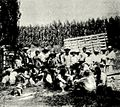 Almuerzo de la peonada Fundo Timmermann 1903.jpg