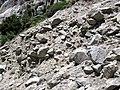 Alpine glacial till (Pleistocene; Lee Vining Canyon, Yosemite National Park, California, USA) 3.jpg
