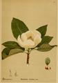 American Medicinal Plants-012 0077.png
