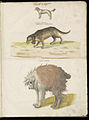 Animal drawings collected by Felix Platter, p2 - (78).jpg