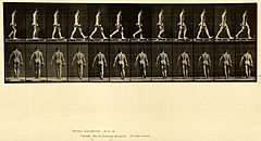 Animal locomotion. Plate 28 (Boston Public Library).jpg