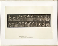 Animal locomotion. Plate 712 (Boston Public Library).jpg
