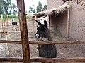 Animals of Peru 134.jpg