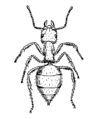 Ant (PSF).png