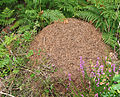 Ant nest on Trendlebere Down.jpg