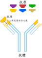 Antibody-zh.png