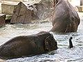Antwerp Zoo (12211070454).jpg