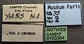 Apomyrma stygia casent0103304 label 1.jpg