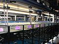 Aquarias Danio rerio-science institute 01.jpg