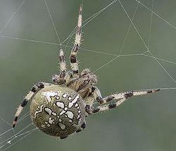 cum să acoperiți venele păianjen pe picioare