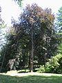 Arboretum Bukovina 453.jpg
