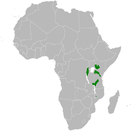 Arizelocichla nigriceps distribution map.png