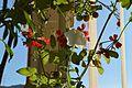 Art Ladislav Kopůnec Univerzon 0158563 Nature Art works Natura.jpg
