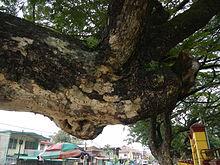 Asingan,PangasinanFGatejf7921 25.JPG