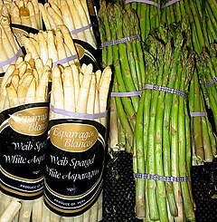 Asparagus -Spesies: A. officinalis Nama binomial Asparagus officinalis L./Photo by wikipedia