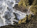 Atlantic swell battering coral cliff.jpg