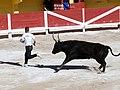 Attento al toro^ - panoramio.jpg
