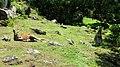 Auckland Zoo, North Island - panoramio (11).jpg