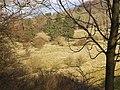 Ausblick vom Kassel-Steig auf Hutungen, das begehbare Landschaftsgemälde, Wir blicken auf eine Weide, auf der Gallowayrinder friedlich grasen. Sie zählt zu den Resten weiter Huteflächen, die ehemals .... - panoramio (4).jpg