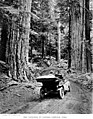Automobile at the entrance to Mount Rainier National Park, 1910 (TRANSPORT 33).jpg