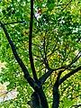 Autumn 2015 (127915493).jpeg