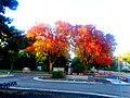 Autumn Colors in Maple Bluff - panoramio (5).jpg
