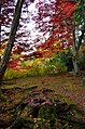 Autumn foliage 2012 (8252557517).jpg