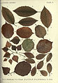 Autumnal leaves (Plate 9) (6796244907).jpg