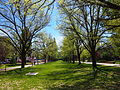 Avenue of trees at the ANU October 2012.JPG
