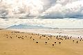 Aves Marinhas da Ilha do Superagui.jpg
