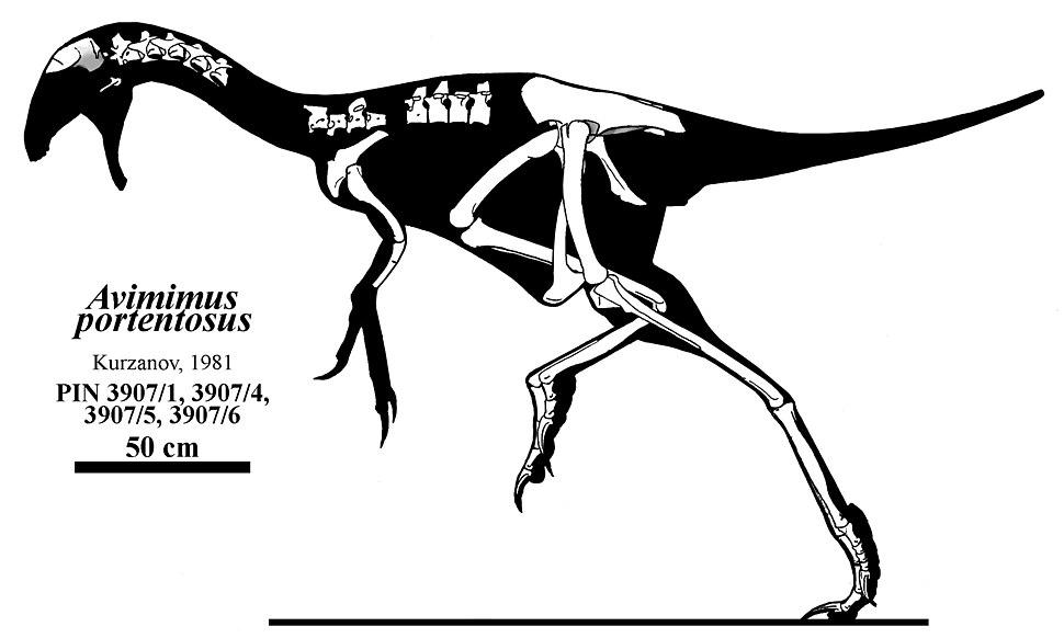 Avimimus portentosus