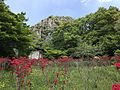Azalea flowers in Mifuneyama Garden and Mount Mifuneyama 1.jpg