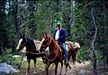 Backcountry Horsemen of California, taking fish to high mountain lakes for planting, 1987 (4) (26252163634).jpg