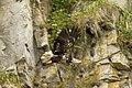 Bald eagle (5920419752).jpg