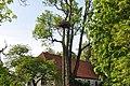 Baltā stārķa ligzda Nr.1135, Lībagu pagasts, Talsu novads, Latvia - panoramio (1).jpg