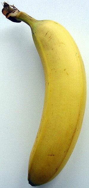 Fusarium oxysporum f.sp. cubense - A Cavendish banana